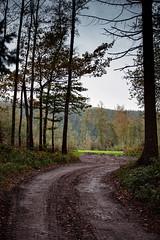 191101_213_Aywaille (Patrick Decorte) Tags: belgique belgium aywaille mondesauvagedaywaille mondesauvage parcanimalier animalier patrickdecorte paysage nature chemin allée nikond700