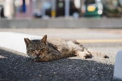 猫 (fumi*23) Tags: ilce7rm3 sony sel85f18 emount 85mm fe85mmf18 a7r3 animal street ねこ 猫 ソニー cat chat gato neko bokeh dof depthoffield