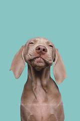 She said I'm a Liebling (Wieselblitz) Tags: dog dogs dogphotographer dogphotography dogportrait doginthestudio dogsonality elkevogelsang editorialdogphotographer editorialdogphotography editorialphotography studio studioportrait studiodogportrait studiodog pet pets petphotography petportrait petphotographer portrait portraitdog commercialpetphotographer commercialdogphotographer commercialphotography commercialdogphotography commercialpetphotography wieselblitz
