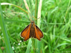 Butterfly 1892 (+1800000 views!) Tags: butterfly borboleta farfalla mariposa papillon schmetterling فراشة