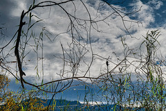The World is turning (*Capture the Moment*) Tags: 2018 2019 backlight backlit bäume filze fotowalk gegenlicht inzell landschaften sonya6300 sonye356318200oss sonyilce6300 trees