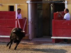 eral (aficion2012) Tags: arles septembre 2017 aficionados practicos francia france corrida bullfight eral toro taureau tauromachie tauromaquia provence bull tauromachy toril porte