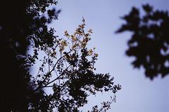 Untitled (agataurbaniak) Tags: nikonf5 nikon f5 slr 135mmf28ais 135mm 135 28 f28 ais ai fujicolorc200 plustek opticfilm plustekopticfilm120 vuescan kodak ektachrome e100 35mm slide film color colour transparency positive