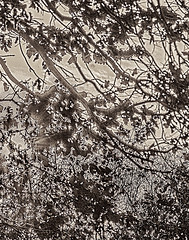 Pattern in B&W of Silhouette of Tree Branches and Foliage in Autumn Sky (nrhodesphotos(the_eye_of_the_moment)) Tags: dsc04443001092 patterns bw foliage autumn sky outdoors les manhattan monochrome branches limbs leaves nature black blackandwhite