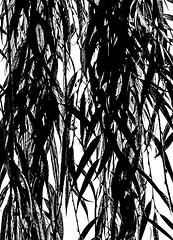 DarkLeaves.jpg (Klaus Ressmann) Tags: omd em1 china hangzhou klausressmann leaves nature threepools westlake winter blackandwhite branches design flcabsnat willow omdem1