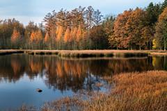 Herfstkleuren (Pieter ( PPoot )) Tags: herfst kleuren bos ven spiegeling