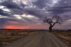 Atkins Bottom tree at sunset (gary_photog) Tags: arkansas atkinsbottom sunset clouds fantasticnature coth coth5