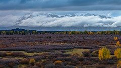 Emergence (chasingthelight10) Tags: landscapes travel events photography forests foliage meadows mountains rivers snowscenes places oxbowbend wyoming grandtetonnationalpark schwabacherlanding willowflats snakeriver