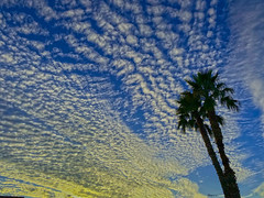 All Along the Watchtower (oybay©) Tags: palmtrees palm trees suncitywest arizona sky sunset clouds color