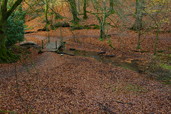 Woodland Dell Hants NT (Adam Swaine) Tags: woodland woodlandfloor trees leaves autumn autumncolours autumnviews walks nature nationaltrust naturelovers england english britain british beautiful uk ukcounties counties countryside canon greatbritain streams county