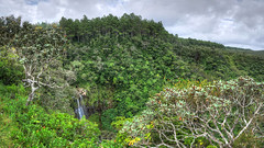 MAURITIUS Chamarel III (stega60) Tags: mauritius ilemaurice camarel alexandrafalls waterfall djungle forest trees plants green clouds sky hdr stiched panorama stega60 pano