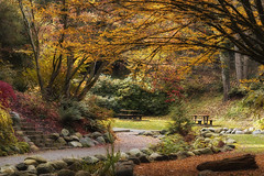 A breath of fresh air (charhedman - off till the middle of December) Tags: sendellgardens langley benches autumn pathway aroundthecorner landscape macrolens colours