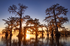 The Huddle (Hilton Chen) Tags: atchafalayabasin autumn backlight bayou cypresstrees landscape louisiana reflectedsunburst reflection spanishmoss starburst sunburst sunset swamp