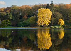Autumnal reflections (ORIONSM) Tags: stourhead lake water reflections tree golden autumn apollo olympus omdem1 olympus14150mm