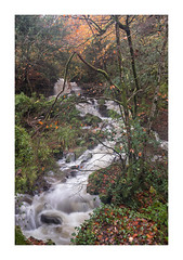 T R E G A R G U S (Andrew Hocking Photography) Tags: tregargus woods valley autumn november woodland ststephen staustell cornwall trees moving water slowshutter motion river stream rain weather england uk gb orange red yellow leaves