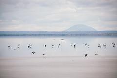Lake Manyara Horizon II (Javier Pimentel) Tags: africa eastafrica lake lagomanyara lago parquenacional lakemanyaranationalpark manyaranationalpark manyara lakemanyara tanzania naturalpark