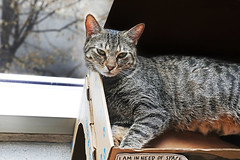 I Am in Need of Space (kirstiecat) Tags: cat caturday feline kitty chat gato tabbycat window vancouver catada vacatver