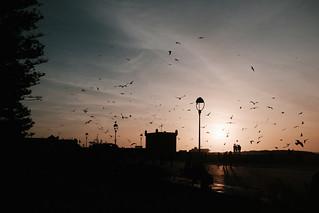 Essaouira-35