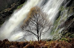 Defiance (An Gobán Saor) Tags: defiance powerscourt waterfall tree november wicklow ireland angobánsaor angobansaor