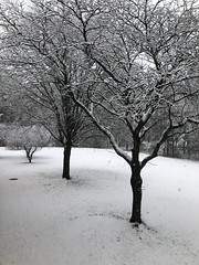 Tag game: View from my window (Foxy Belle) Tags: snow window scene trees winter tag game view from