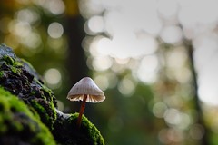 (annepasquet) Tags: nantes france autumn fuji proxy light mushroom nature bokeh