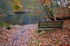 Bench with a View (Adam Swaine) Tags: bench lakes naturelovers nature nationaltrust autumn autumncolours autumnviews adamswaine 2019 trees waterside england english britain uk ukcounties counties countryside walks beautiful seasons leaves woodland woodlandfloor hants