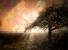 The dark tree (Jean-Michel Priaux) Tags: sun sunset shadow snow paysage priaux landscape texture flash hot terrific scary scare lonesome paint painting bindernheim