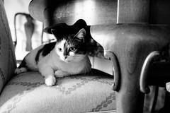 320-365 (Garen M.) Tags: chip ella fujifilmx100f jojo maddie cats home