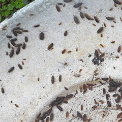 Disturbance:  23.11.19. (VolVal) Tags: dorset bournemouth boscombe garden wildlife woodlice bulbbowl november