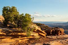 Dead Horse Point State Park   |   Topography (JB_1984) Tags: tree junipertree wood trunk remains decay erosion rock weathering park deadhorsepoint deadhorsepointstatepark moab utah ut unitedstates usa nikon d500 nikond500