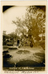 Garden of Gethsemani  Jerusalem (jmlwinder) Tags: 1200dpiscans blackandwhite bnw gardenofgethsemane jerusalem monochrome olivetree realphotopostcard tourist