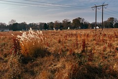 319-365 (Garen M.) Tags: fujifilmx100f landscape oaks paulingsroad valleyforge winter2019