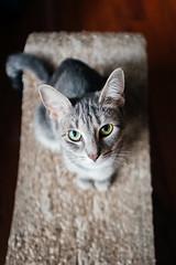 322-365 (Garen M.) Tags: chip ella fujifilmx100f jojo maddie cats home
