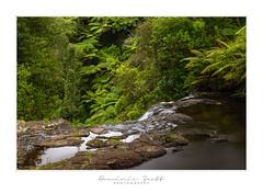 Kaiate Falls Punga Ferns (Dominic Scott Photography) Tags: dominicscott newzealand bayofplenty ferns pungas punga waterfall waterfalls kaiate falls sony ilce7rm3 sel2470gm leeirnd leefilters manfrotto 10stop bigstopper