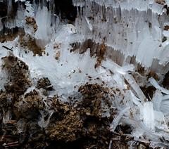 Ice crystals (sailronin) Tags: nature ice crystals naturalformation groundice soil macro leicas006