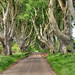 Bregagh Road NIR - Dark Hedges 11