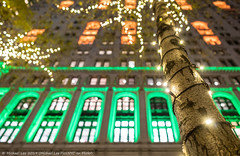 Zuccotti Park (20191122-DSC09940-Edit) (Michael.Lee.Pics.NYC) Tags: newyork zuccottipark usrealtybuilding night architecture illuminated bokeh tree christmas windows stringlights sony a7rm4 zeissloxia21mmf28