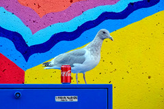 Break time (James_D_Images) Tags: seagull granvilleisland vancouver britishcolumbia utilitybox aluminum can coke cocacola colourful painted concrete wall pattern design lines angles blue red yellow orange purple juxtaposition