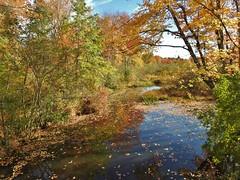 Fall wetlands... (Jane Lazarz Nature Photography) Tags: walkingnewengland janelazarz massachusetts fallinnewengland nikonp900 nikon massachusettsautumn autumn newenglandcountryside westernmassachusetts nikonnature autumninnewengland trails woods trailinthewoods wetlands
