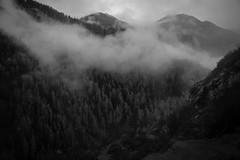 i fa atun (Toni_V) Tags: m2402576 rangefinder digitalrangefinder messsucher leicam leica mp typ240 type240 35lux 35mmf14asphfle summiluxm hiking wanderung randonnée escursione graubünden grisons grischun unterengadin engiadinabassa ardeztaraspscuol nebel fog mist alps alpen landscape herbst autumn switzerland schweiz suisse svizzera svizra europe ©toniv 2019 191102 bw monochrome blackwhite schwarzweiss esherbstelt