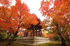 Autumn trees in the old temple (Teruhide Tomori) Tags: 智積院 京都 寺院 日本 東山 紅葉 tradition architecture momiji 樹 tree autumn red maple kayede kyoto japan japon 秋 モミジ temple chishakuintemple 鐘楼