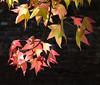 Shades of Autumn #1