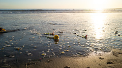 Saying goodbye (ron_dilley) Tags: malibu ocean sea flowers goodbye countyline