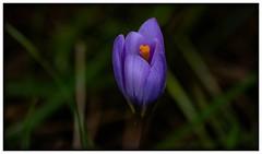 """PETITE COEUR"" #photooftheday #photography #pontevedra #macrophotography #flowers #colors #naturaleza #nature #vilagarciadearousa #vga_viva #VisitaOSalnés #vilagart #vilagarciaviva #galicia #galiciavisión #galiciapasion #galiciamaxica #galeoska #quevereng (saffsunset) Tags: photooftheday flowers galiciavisión nature galiciamaxica vgaviva galeoska pontevedra colors vilagarciadearousa vilagart galicia naturaleza macrophotography galiciapasion visitaosalnés autumn queverengalicia photography vilagarciaviva"
