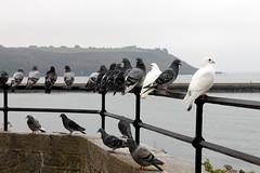 Assembly Point (JULIANA LEFTEROVA) Tags: birds pigeons birdsinthecity sea urbanexploring urbanscape