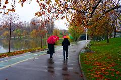 Late november in Bucharest (Dumby) Tags: landscape bucurești românia autumn fall rain umbrella outdoor park nature colors sector3 ior titan