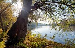 Vetheuil (hbensliman.free.fr) Tags: travel france nature landscape rural river water foliage pentax pentaxk1 pentaxart autumn seasonoutdoor outside