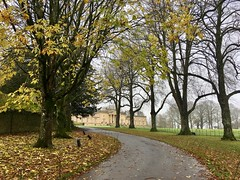 Autumn Drive (richwall100 - Thank you for Four Million views) Tags: stourhead mansion house nationaltrust drive trees autumn