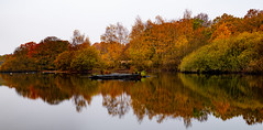 The last of the Autumn Colors... (Aleem Yousaf) Tags: autumn epping forest hollow ponds whipps cross east london foliage long exposure soft graduated filter nikkor nikkon nature d850 wide angle mirror photography calm serene morning
