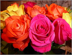 Birthday Roses .. (** Janets Photos **) Tags: uk hull eastyorkshire roses flowers flora plants presents